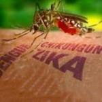 El negocio del zika y los mosquitos transgénicos