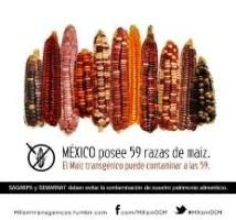 Tres años de protección jurídica a las siembras de maíz