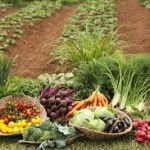 Dice la ONU que las cosechas orgánicas a menor escala son la mejor forma de alimentar al mundo