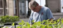 Organizaciones alertan sobre la presencia en España del teosintle, un ancestro del maíz que actúa como especie invasora