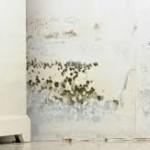 Moho: La Toxina Común Que Puede Ser MUCHO Más Dañina Que los Pesticidas y Metales Pesados