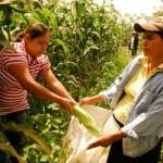 Mujeres producen más de la mitad de los alimentos en América Latina: FAO