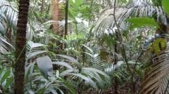 La actividad humana perturba ecosistemas y afecta la biodiversidad: estudio de la UNAM
