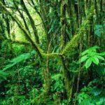 Las selvas tropicales jóvenes ayudan a mitigar el cambio climático