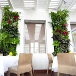 Desarrollan universitarias modelo de jardines verticales en espacios reducidos