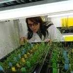 Investigadora refuta argumentos en favor de la siembra libre de maíz transgénico