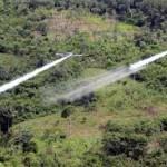 Colombia mantiene el uso del glifosato para erradicar cultivos de hoja de coca