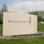 Monsanto duplicaría ventas México en cinco años con aval a maíz transgénico