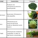 Cómo Cultivar Brócoli Orgánico en Casa