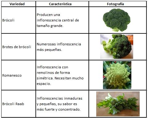 Variedades de Brócoli