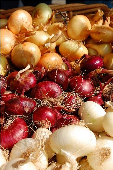 Variedades de cebolla. Por Bob Haefner