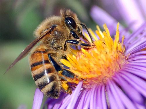 abejas produccion miel, bee honey production