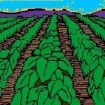 No corresponde a Semarnat ni a Conafor impulsar el cultivo agroindustrial: CCMSS
