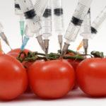 ¿Por qué los alimentos transgénicos son peligrosos?