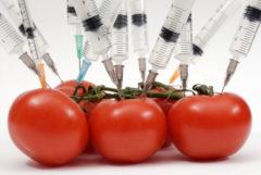 alimentos transgenicos, GMO foods