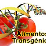 Un estudio de alimentación que duró una década, revela los peligros significativos a la salud de los alimentos transgénicos