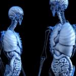 La fatiga crónica comienza en el intestino