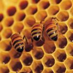 Miel en Yucatán