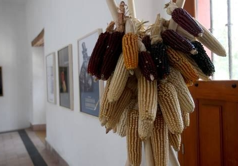 Continua-la-siembra-ilegal-de-soya-transgenica-en-la-peninsula-de-Yucatan