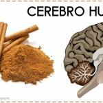 Esta Especia Culinaria Podría Retrasar o Disminuir el Alzheimer