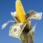 Importación récord de maíz; en 6 meses se gastaron 1,931 mdd