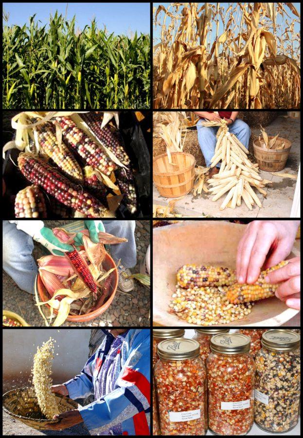 dic-maíz