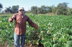 Contribución de las leguminosas en la agroecología y alimentación animal en la región peninsular maya de México