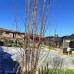 Prepara a tus árboles frutales caducifolios para la llegada de la primavera