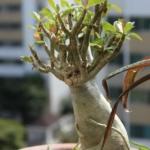 Cómo Cultivar Ginseng Orgánico en tu Casa