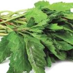 5 plantas y alimentos medicinales