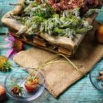 15 Plantas Medicinales Que Arruinarían A Las Farmacéuticas.