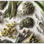Fundamental para la salud del mexicano la medicina tradicional