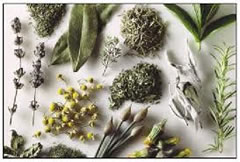 herbolaria medicinal, herbal medicine