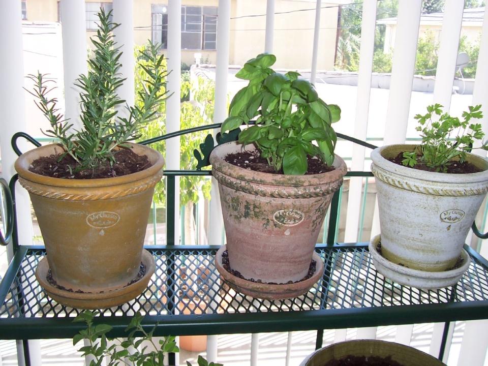 técnicas para cultivar hierbas aromáticas en casa - vía orgánica