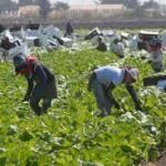 Hacia la construcción de un sindicato nacional de jornaleros agrícolas