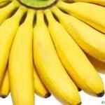 """El plátano OMG: Un caso de """"biopiratería"""" en el Pacífico"""