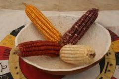 Exigen campesinos pago de más de $3 mil millones y suspender importación de maíz