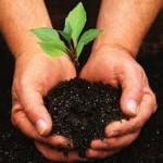 Producen en la UNAM fertilizantes biológicos en beneficio del sector agrícola