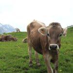 Caracterización y manejo sustentable del ecosistema de pastizales.