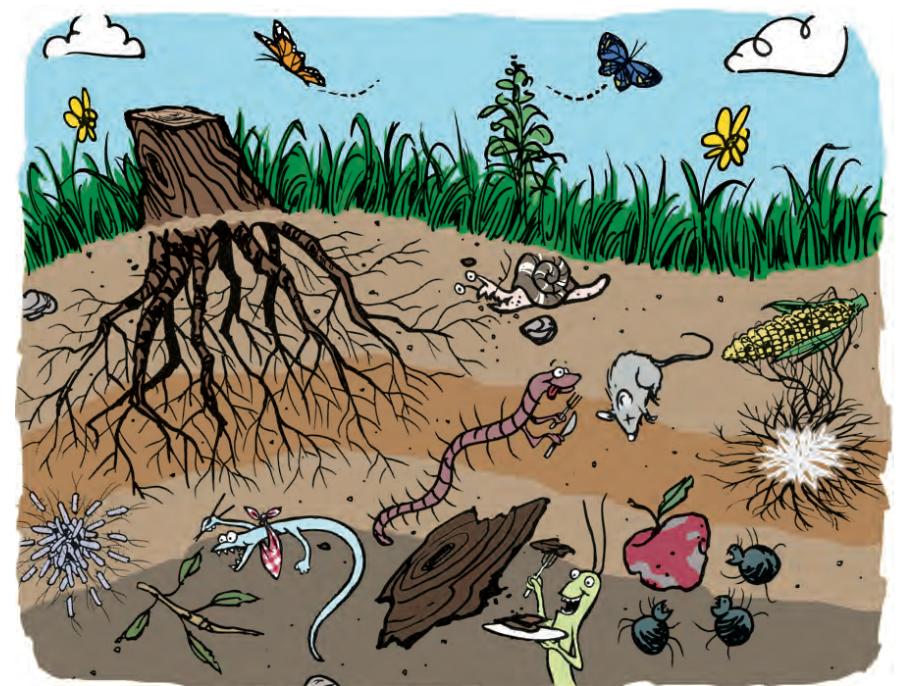 Restauraci n del carbono en el suelo v a org nica for Como abrillantar el suelo