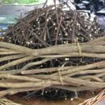 La hierba tradicional con actividad antiviral para apoyar la salud