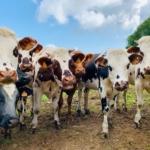 Pastoreo regenerativo: aumento de la producción, resiliencia de la biodiversidad, ingresos y una solución al cambio climático