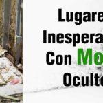 """Moho: La """"Nueva"""" Epidemia Oculta Que Está Destruyendo a la Población"""