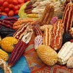 Guerra sucia contra los pueblos del maíz