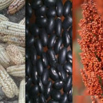 La reforma agraria en el siglo XXI: Construyendo una nueva visión, redefiniendo estrategias y celebrando victorias