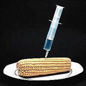 maiz jeringa, corn syringe