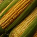 Compran millón y medio de toneladas de maíz a EU y Ferrari ni enterado