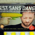 La Unión Europea prohíbe la siembra de maíz transgénico ¿Qué haremos en México en consecuencia?
