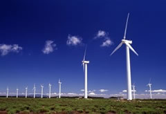molinos de viento, windmills