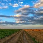 La Agroecología En Tiempos Del Covid-19